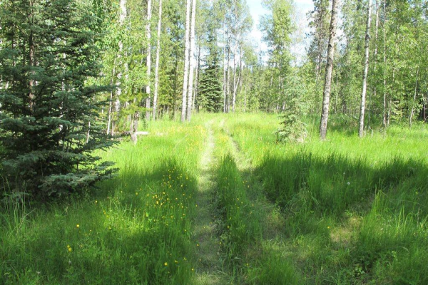 111 acres Bragg Creek/Priddis ST W, Rural Foothills County