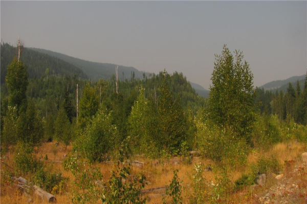 67 Acres Sugar Lake-Sihlis FSR Road,, Vernon