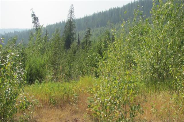 160B acres Sugar Lake-Sihlit Road,, Vernon