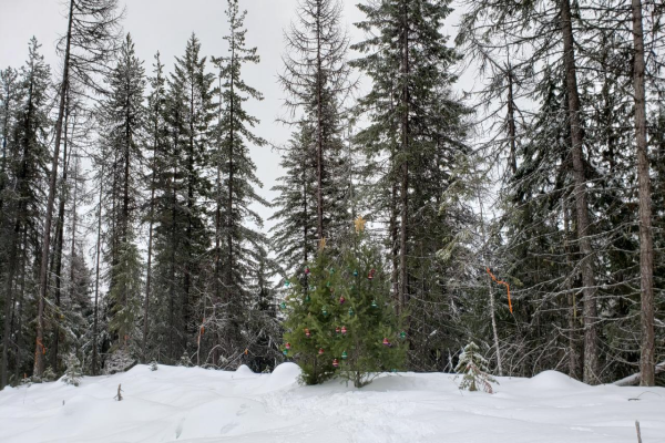 Lot 2 RED MOUNTAIN ROAD, Rossland