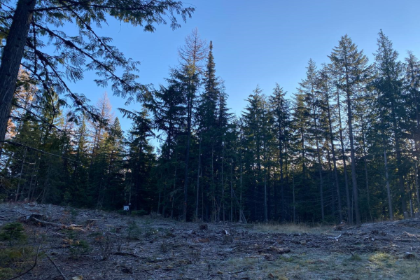 Lot 5 RED MOUNTAIN ROAD, Rossland