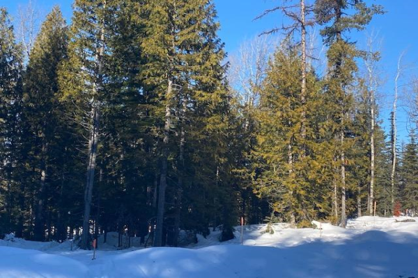 Lot 10 RED MOUNTAIN ROAD, Rossland