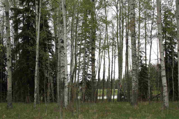 33 Silversprings, Rural Wetaskiwin County