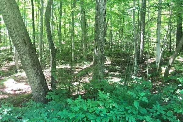Lot 17 East Beehive Dr, Kawartha Lakes